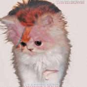 Koty na okładkach płyt