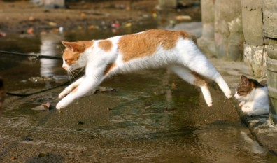 Niesamowity skok kota – w zwolnionym tempie